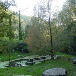 Metasequoia glyptostroboides, a dimora dal 1996 (foto 2012)