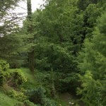 Metasequoia glyptostroboides, a dimora dal 1996 (06-2015)