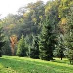 Picea omorika, a dimora dal 1996, corona schianatata dopo la nevicata del 2015 (foto P. Bettoni 2010)